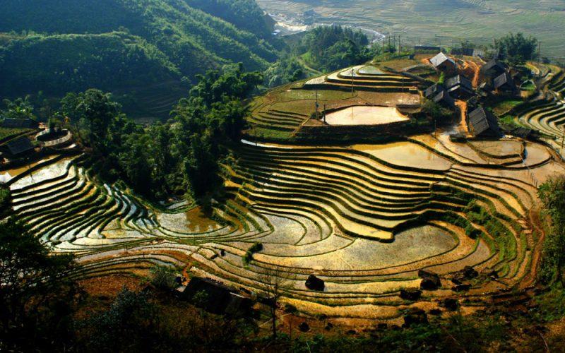 5_2-rice-terraces-vietnam-3