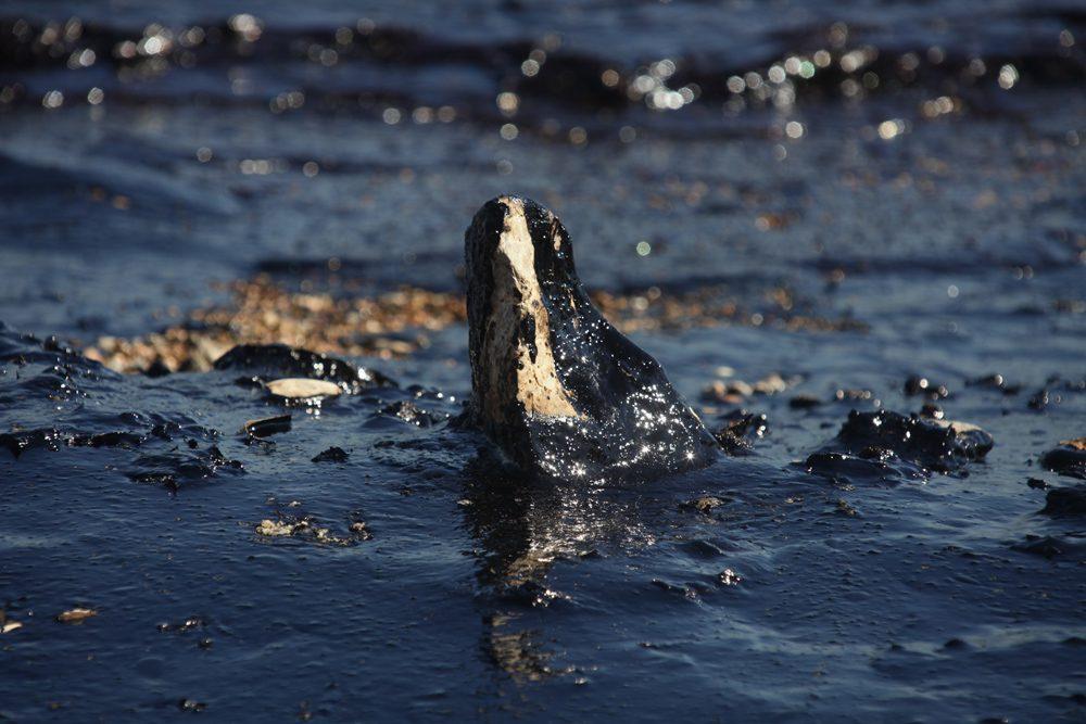 Σαλαμίνα, θάλασσα μαύρη/φωτό: Σπύρος Τσακίρης