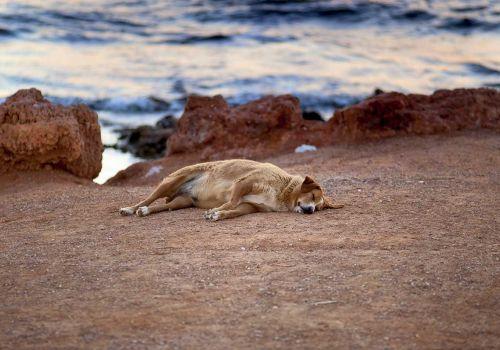 Σκύλος σε διακοπές/ φωτό: Λευτέρης Μιαούλης