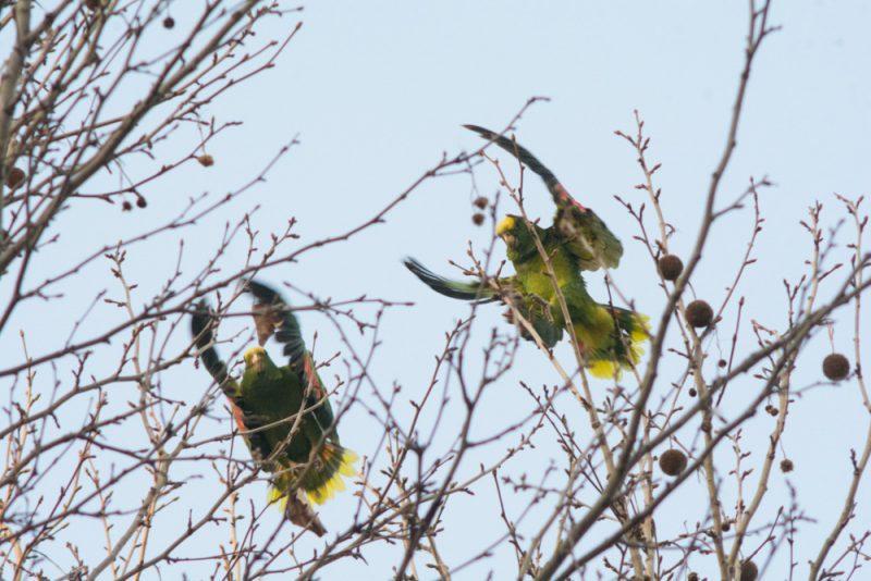 papagai-6-von-13-copy