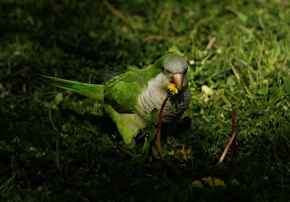 papagaloi-14